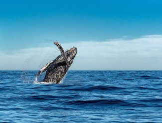 Not Just Ordinary Investors: Bitcoin Whales Buying More Cryptocurrency
